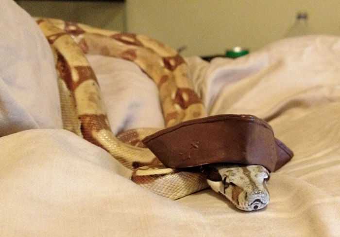 snakes and hats 30 (1)