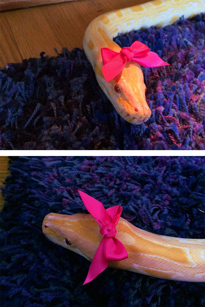 snakes and hats 32 (1)