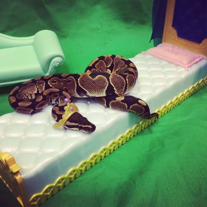 snakes and hats 33 (1)