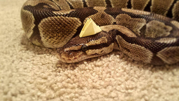 snakes and hats 34 (1)