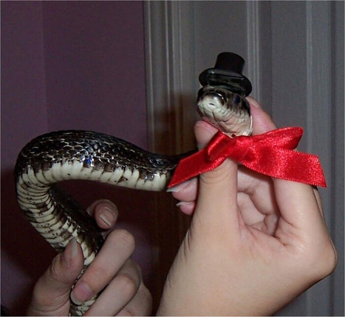 snakes and hats 35 (1)