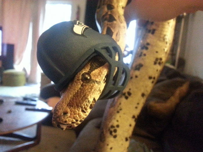 snakes and hats 36 (1)