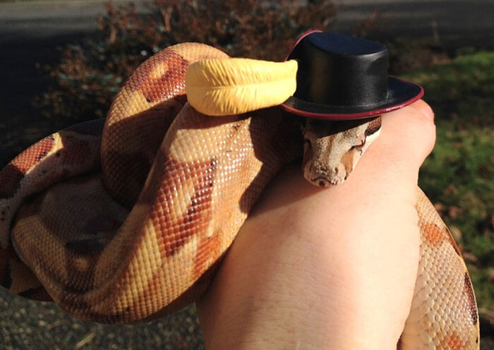 snakes and hats 37 (1)