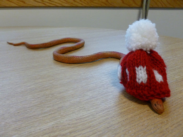 snakes and hats 40 (1)