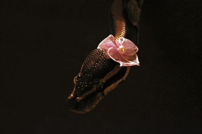 snakes with hats 41 (1)