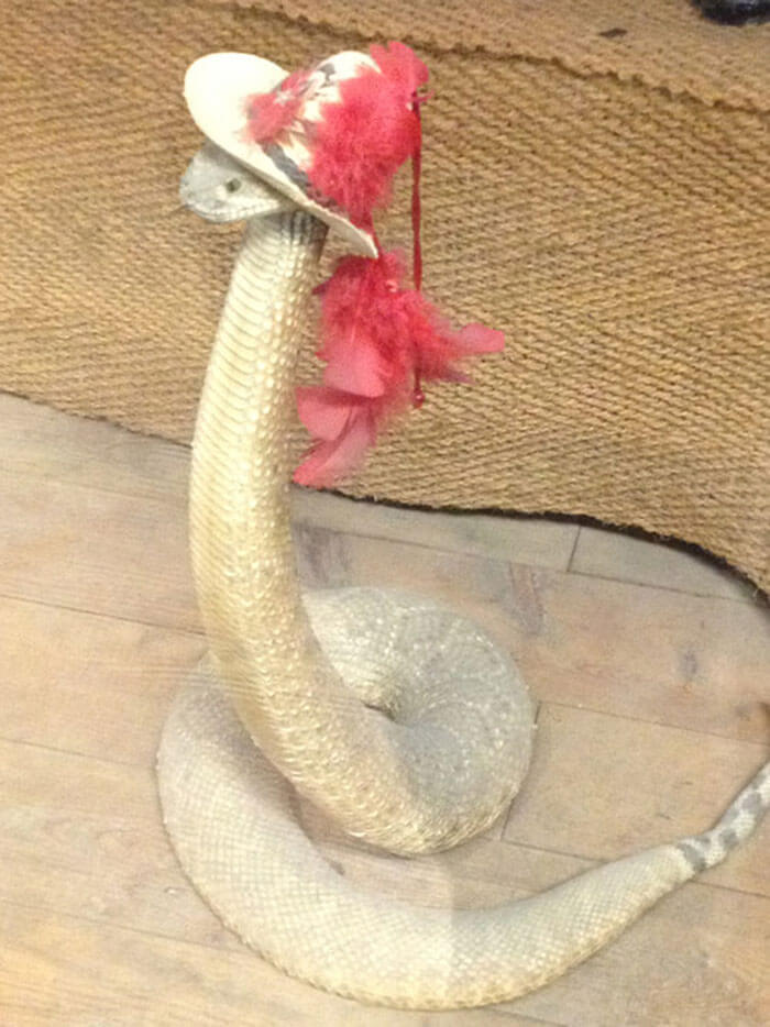 snakes in hats 7 (1)