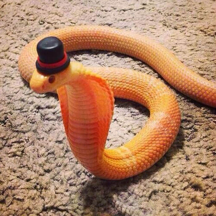 snakes in hats 8 (1)