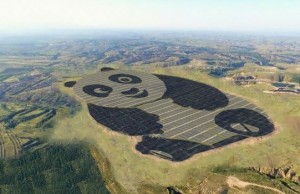 solar farm giant panda feat