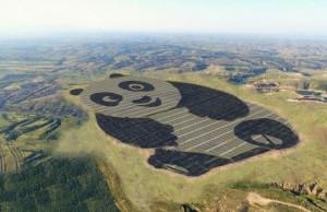 solar farm giant panda feat