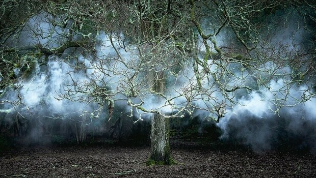 surreal forest photos by ellie davies feat (1)
