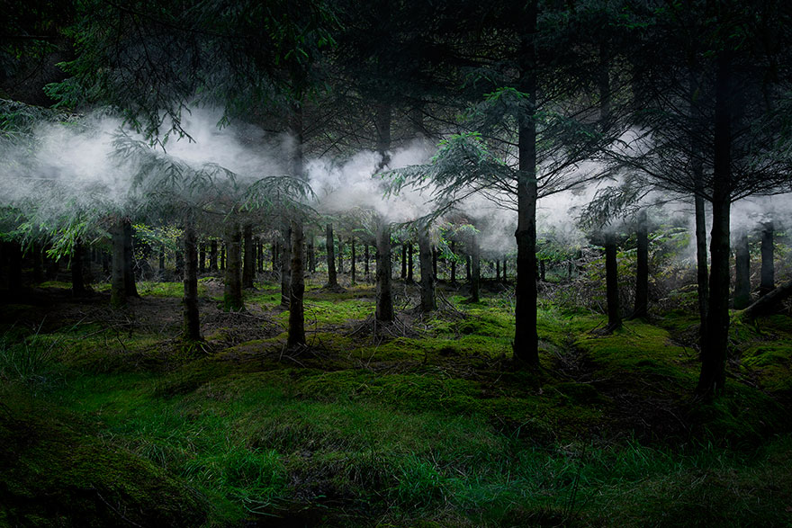 surreal forest photos ellie davies (1)