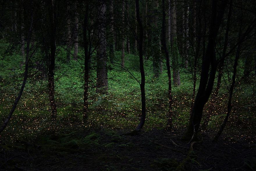 surreal wood photos ellie davies 19 (1)