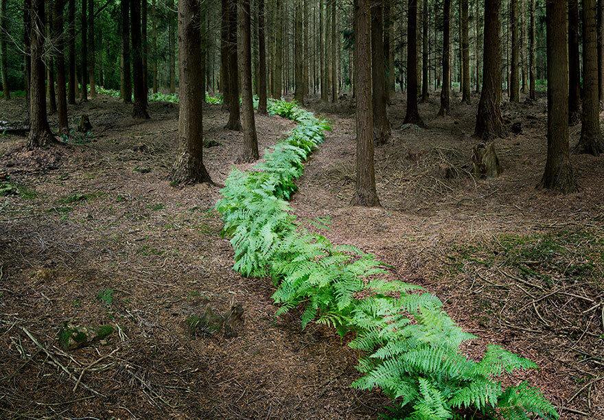 surreal forest photos ellie davies 2 (1)