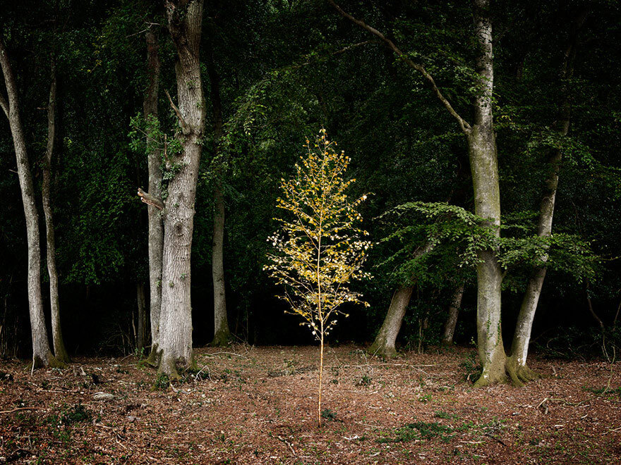 surreal wood photos ellie davies 21 (1)