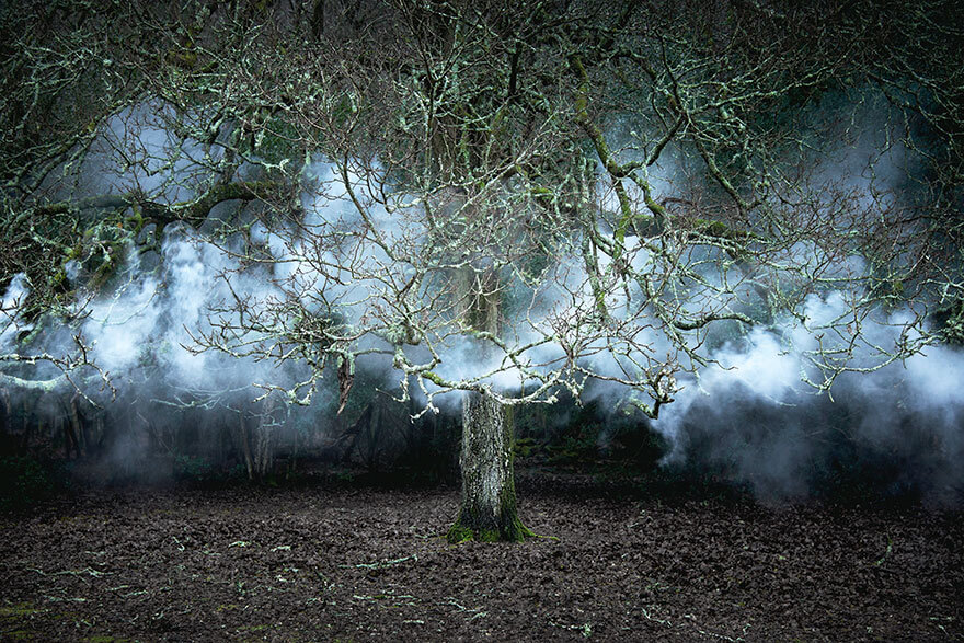 surreal forest photos ellie davies 22 (1)