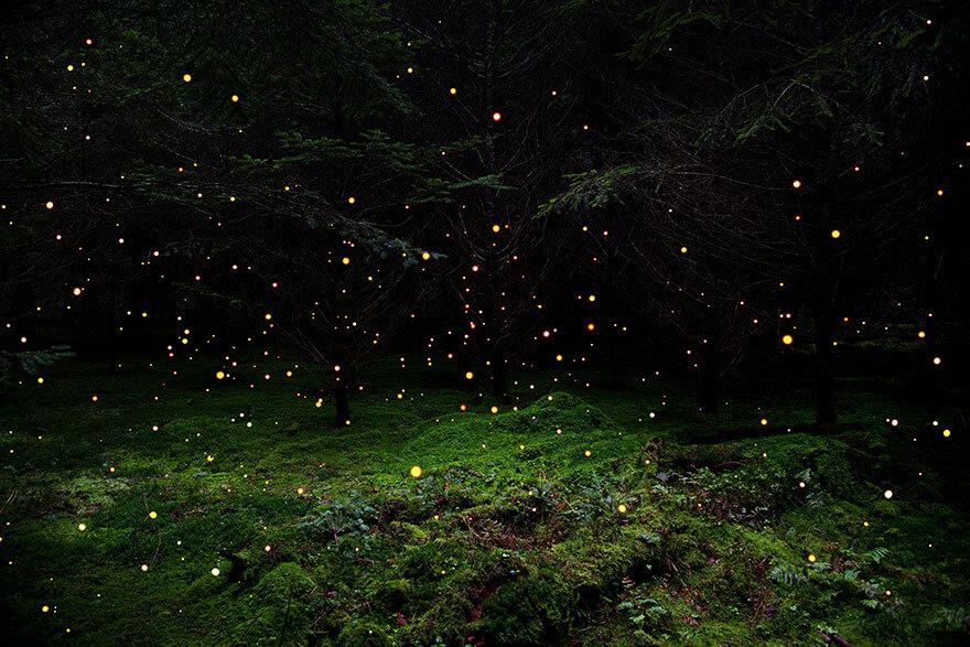 surreal forest photos ellie davies 3 (1)