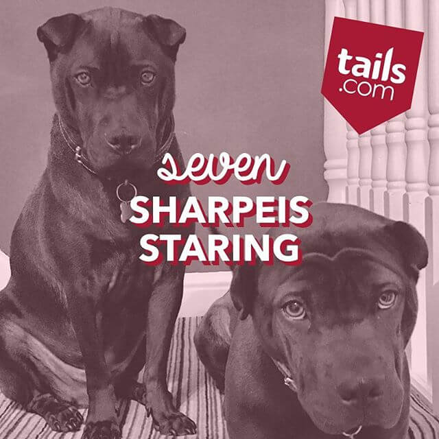 talis food for your dog (1)
