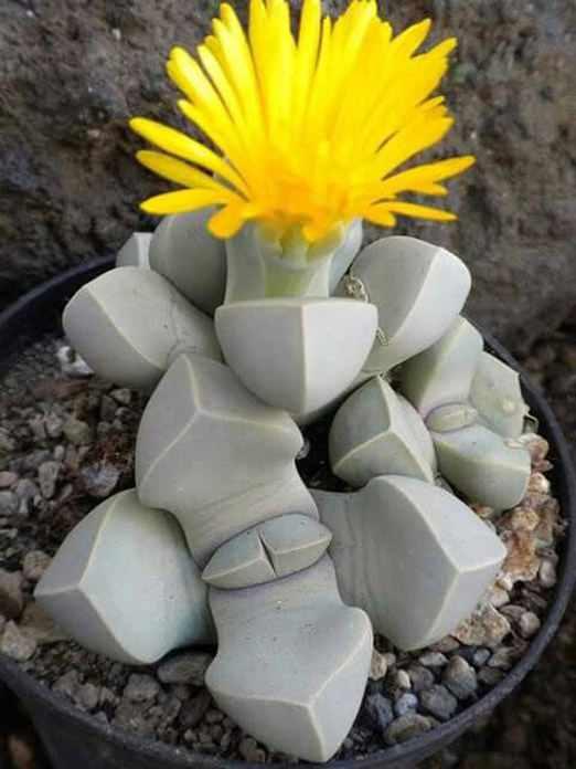 unusual plants (1)