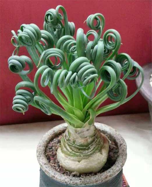 weird plants 10 (1)