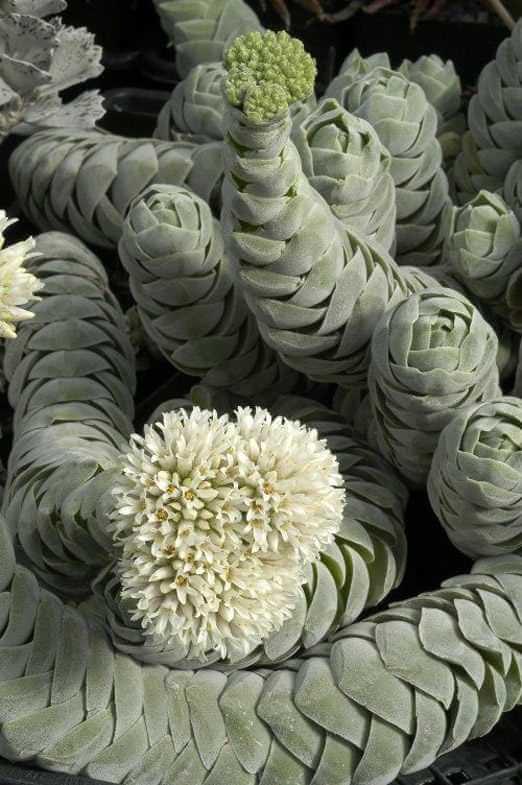 strange plants 14 (1)