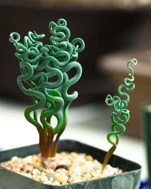 strange plants 15 (1)