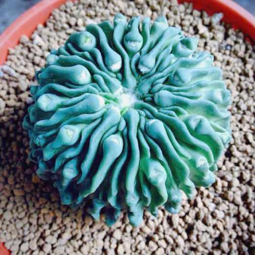 strange plants 16 (1)
