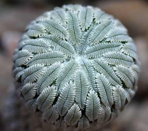 unusual plants 2 (1)