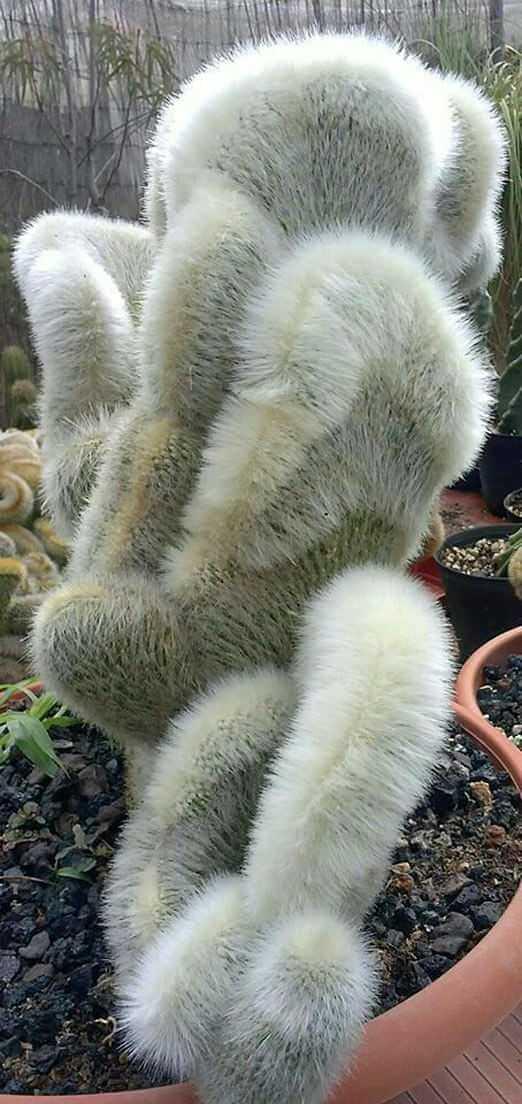 weird plants 8 (1)
