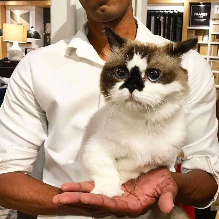 albert munchkin cat 10