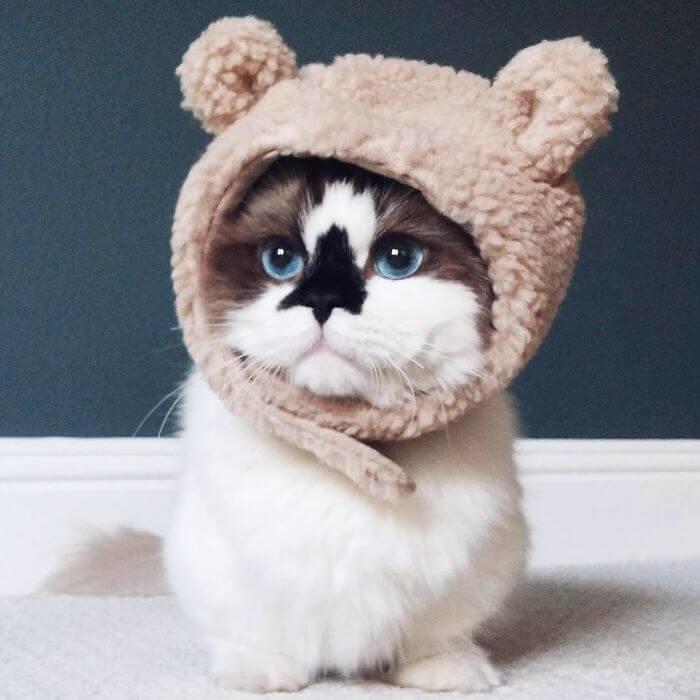 albert munchkin cat 4