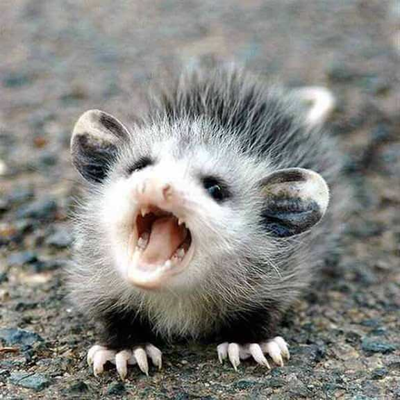 angry baby animals (1)
