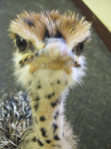 angry baby animals 3 (1)