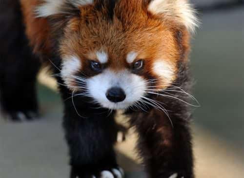 angry tiny animals 5 (1)
