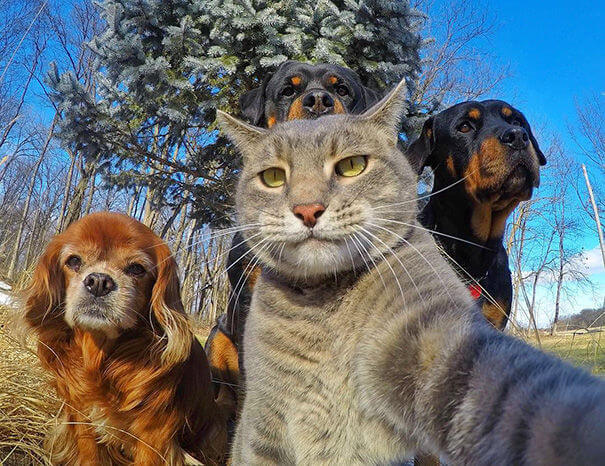 pet selfies 10