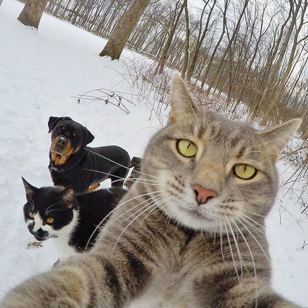 pet selfies 12