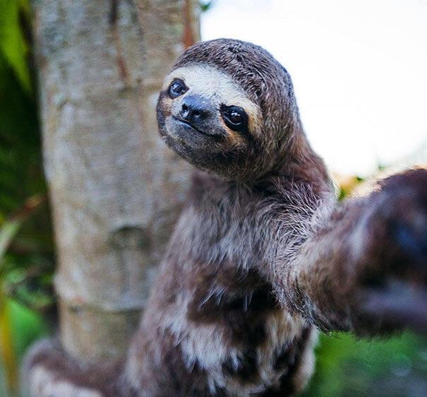 wild selfies 16