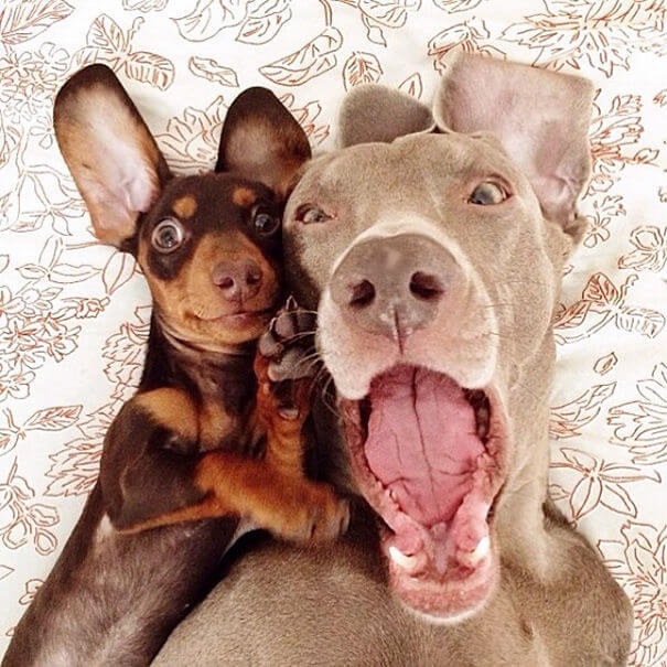 animal selfies 2