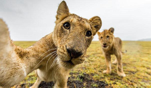 zoo selfies 24 (1)