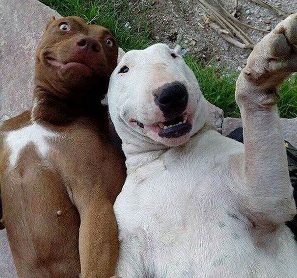 animal self pics 6