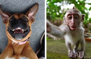 animal selfies feat (1)