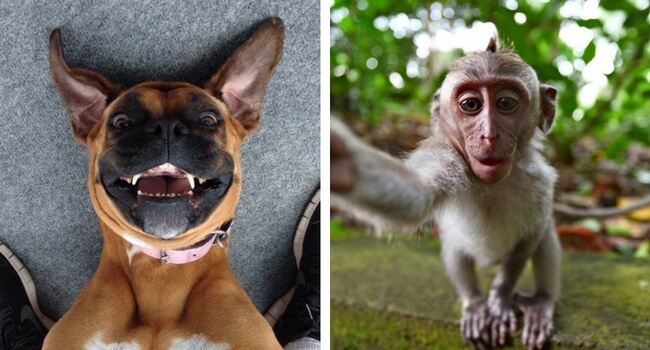The 59 Greatest Animal Selfies Of All Time. Period