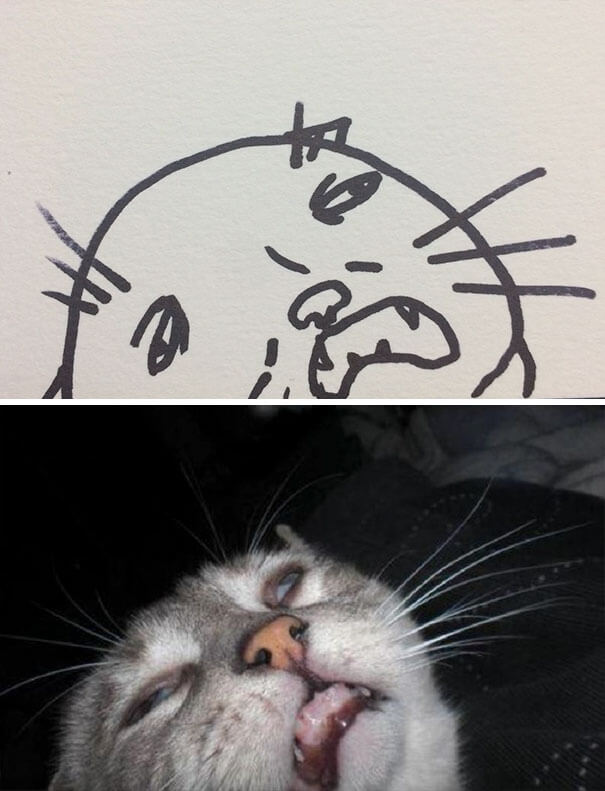 cat drawing 2