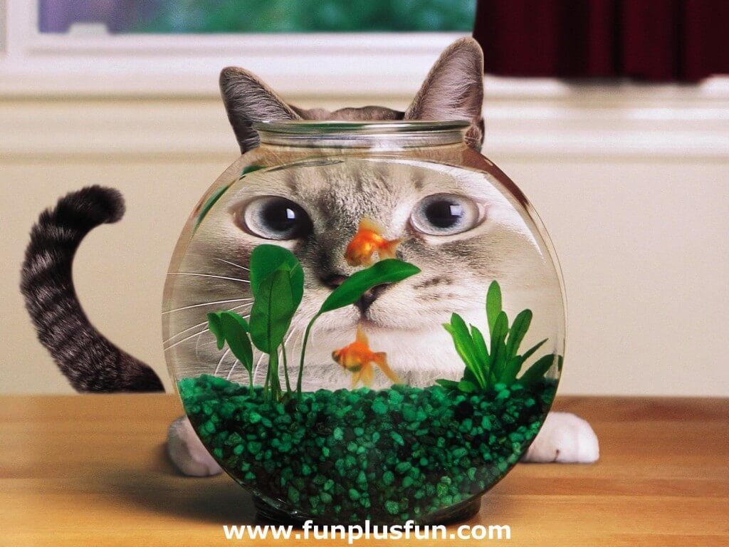 cute cat images 19