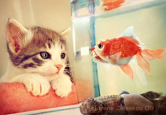 cute cat pics 25