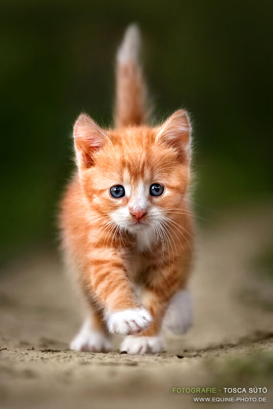 most adorable cats 26