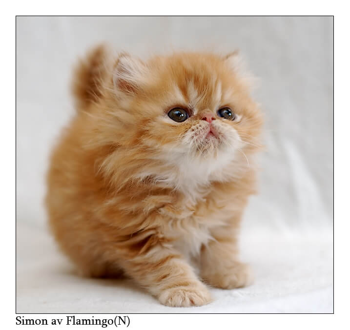 most adorable cats 29