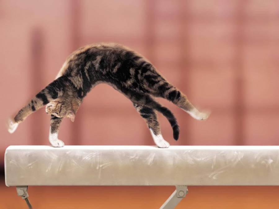 adorablness cats 34