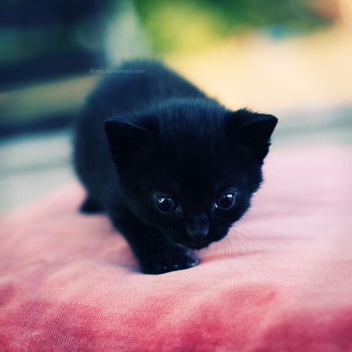 adorablness cats 35
