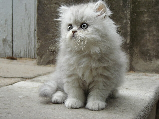 cutest cats ever 38