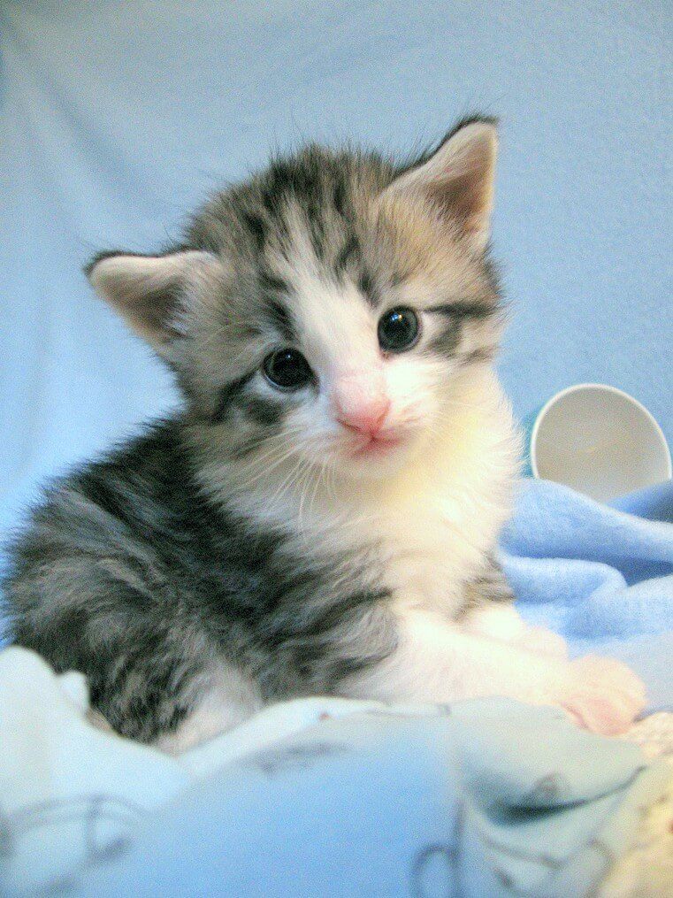 cutest cats ever 39